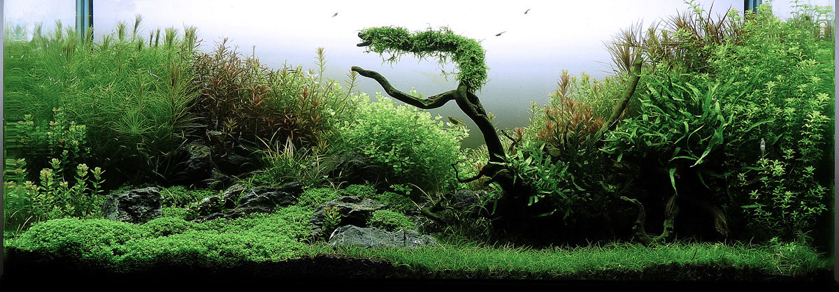 http://hac-aquascaping-contest.com/images/dummy/2012-52-01-big.jpg